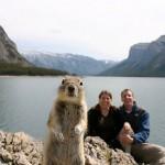 squirrel-crashes-photo-picture