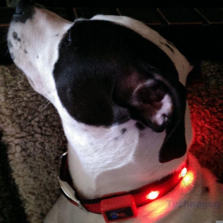 review of epicpet led dog collar technogog. Black Bedroom Furniture Sets. Home Design Ideas