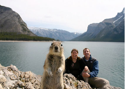 squirrel-crashes-photo-picture
